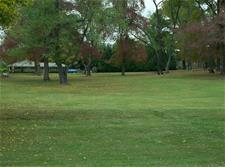 Grassy Area with Trees